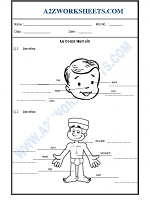 French Worksheet - Le Corps Humain