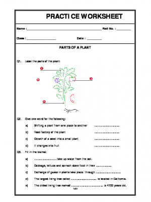 a2zworksheets worksheet of parts of a plant getting to. Black Bedroom Furniture Sets. Home Design Ideas